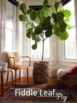 Ideas-para-decorar-tu-hogar-con-macetas-16
