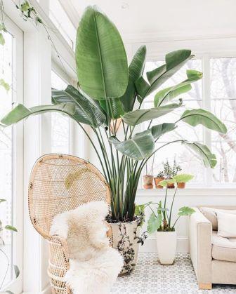 Ideas-para-decorar-tu-hogar-con-macetas-6