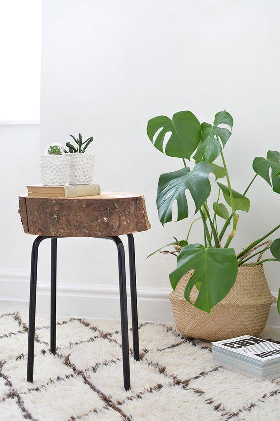 plantas tabutere madera