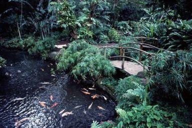 estanque con puente