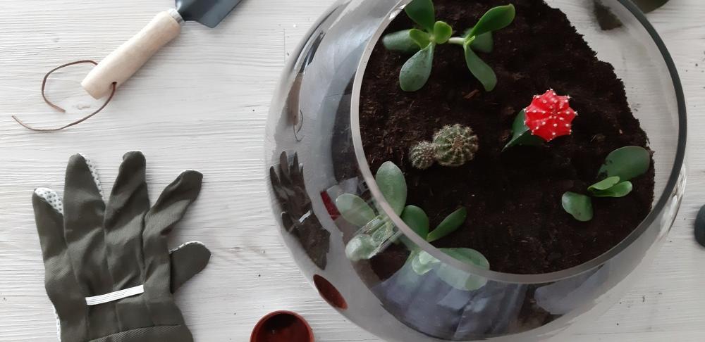 Terrario_plantas