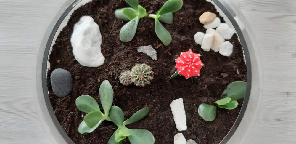 Terrario_plantas y decoración